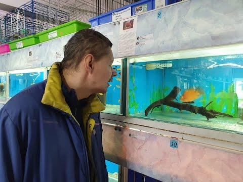 Рыбы дали прогноз Ёшкину!