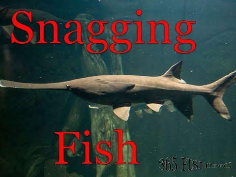 Oklahoma Paddle Fish Snagging