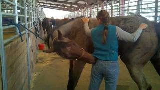 Two for One Special : Equine Massage School in Ogden Utah thumbnail