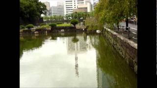 Critters of the Tokyo Imperial Palace Moat