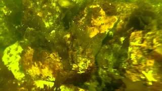 Repeat youtube video cod and strange fish