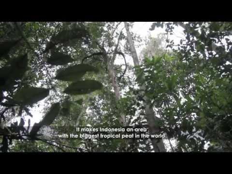 Ekosistem Gambut