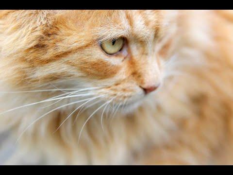 الجنس يحدد -القوائم المفضلة- عند القطط  - نشر قبل 10 ساعة