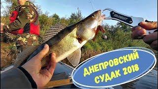 Днепровский СУДАК ещё жив. Рыбалка в августе 2018