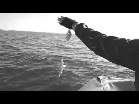 Морской карась  Заозерное   27 июня 2019г