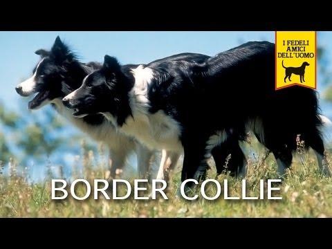 BORDER COLLIE trailer documentario
