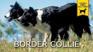 Video BORDER COLLIE trailer documentario download MP3, 3GP, MP4, WEBM, AVI, FLV Oktober 2018