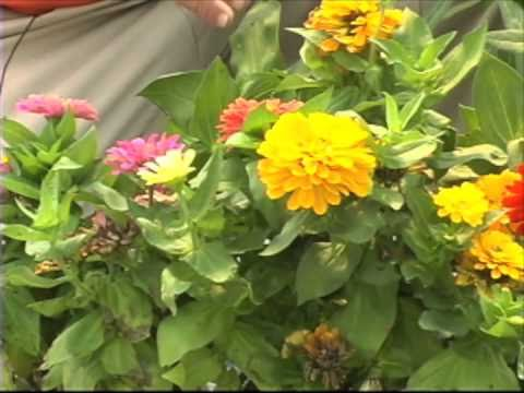 Butterfly Gardening - Plants That Are Butterfly Magnets
