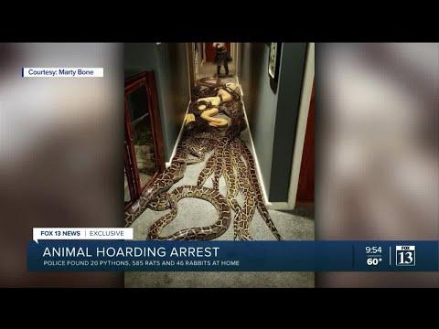 Utah man arrested for possessing 20 Burmese pythons