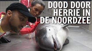 Gaat de bruinvis in de Noordzee dood door herrie? | De Buitendienst over Onderwaterherrie
