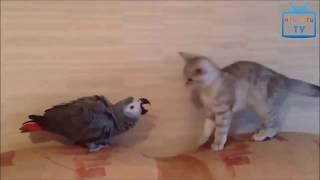 1.オウムや猫ユーモア , 笑いを助けることができません。 : https://you...