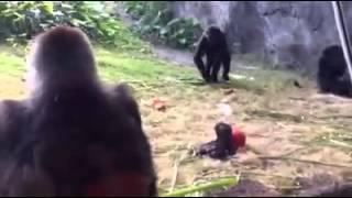 Mama gorilla protecting her baby at Disney's Animal Kingdom