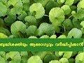 ബുദ്ധിശക്തിയും ആരോഗ്യവും വർദ്ധിപ്പിക്കാൻ ആയുര്വേദം Ayurvedic Herbs For Memory