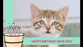 Dear AVA, Happy Birthday!
