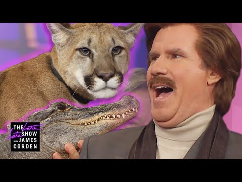 Ron Burgundy Meets a Cougar, Alligator & Skunk