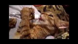 Улыбнись  Это улётные Кошки!