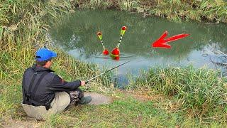 КАРАСЬ на БАТОН и ПОПЛАВОК Рыбалка на удочку в диких местах Ловля краснопёрки с дерева