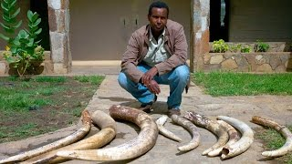 Panorama - Ivory Wars: Out of Africa  (12 Apr 2012) [BBC]