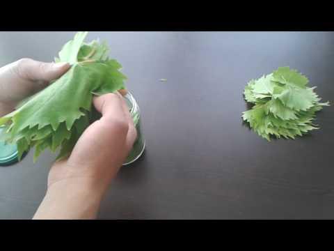 Susuz tuzsuz pıratik yaprak nasıl saklanır