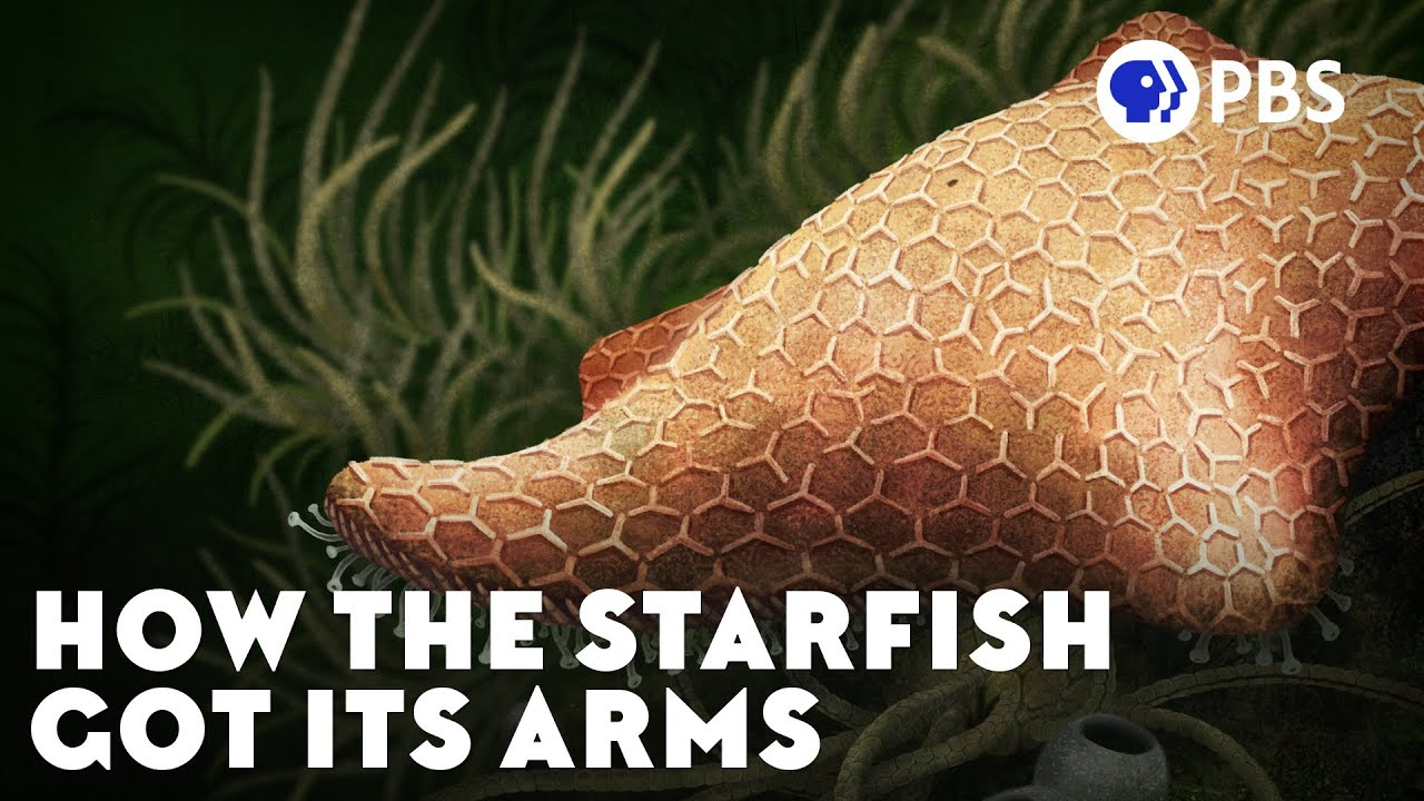 How the Starfish Got Its Arms