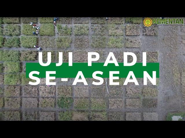 Uji Adaptasi Padi Asal ASEAN di Indonesia