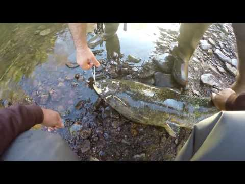 AMAZING FISHING IN UPSTATE NY! 35lb Salmon???