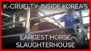 k-cruelty-peta-investigation-inside-korea-s-largest-horse-slaughterhouse