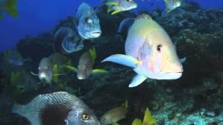 The Animals Voice Presents: Fish