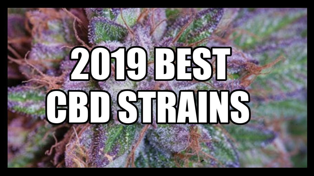 Top10 & BEST High CBD cannabis strains 2019 ~ Marijuana Experts ~