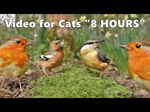 Cat Entertainment : The Ultimate Video for Cats To Watch Birds * 8 HOURS *
