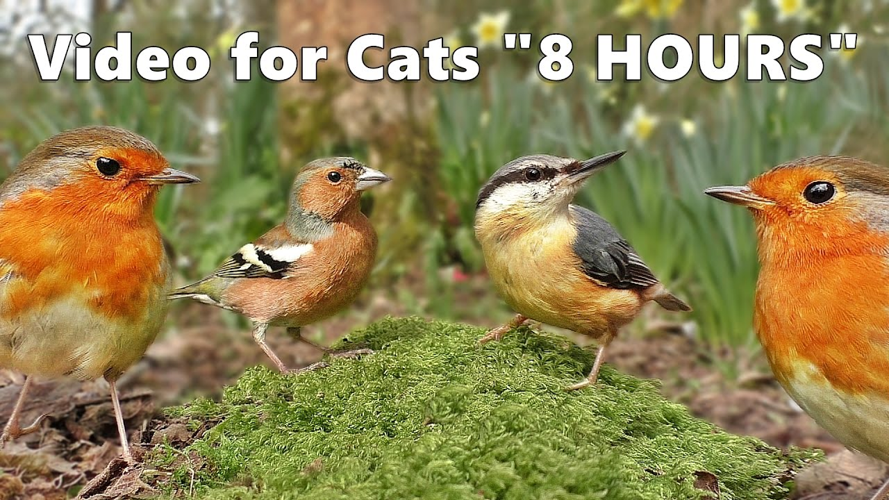 Cat Entertainment : Video and Bird Sounds for Cats * The Ultimate 8 HOURS *