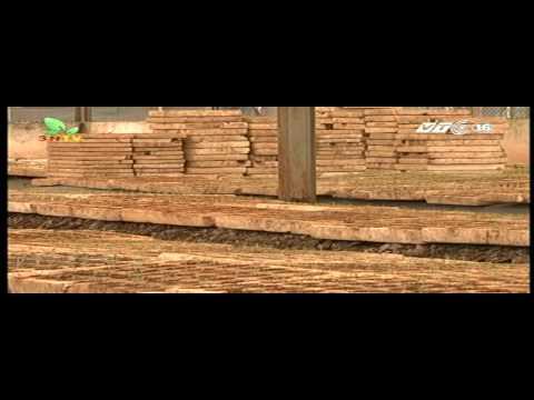 Kĩ thuật trồng dưa chuột theo VIETGAP VTC16