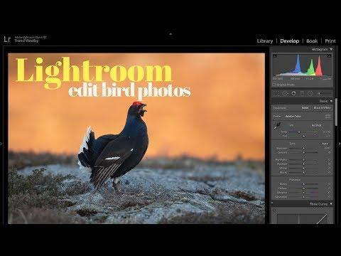 EDIT BIRD PHOTO IN LIGHTROOM | Bird photography tutorial thumbnail