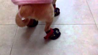 il cane con gli stivali