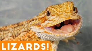 Ultimate Funny Lizard Compilation of 2018 | Funny Pet Videos
