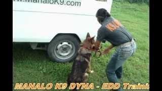 Manalo K9's Dyna - Edd Training