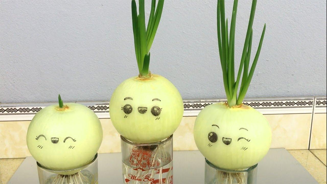 Gartendeko selber machen: Zwiebel einpflanzen Keimende | Garten Deko-Ideen für den Sommer