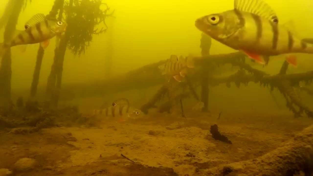 同じ場所で次々に釣れる魚。その中をカメラで撮影したら面白い映像が撮れたw