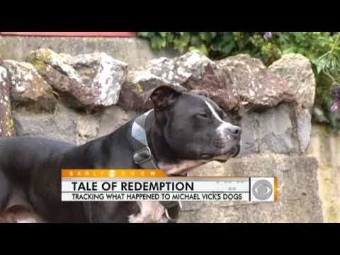 Michael Vick's Rehabilitated Dogs Find Homes