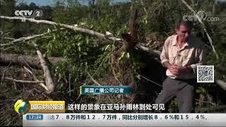 [国际财经报道]亚马孙雨林:每分钟流失一个足球场大小面积| CCTV财经