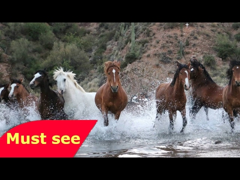 WILD HORSES OF CHINA   NATURE DOCUMENTARY   Discovery Animals Nature documentary