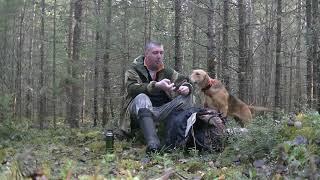 Охота на зайца с русской гончей 2018