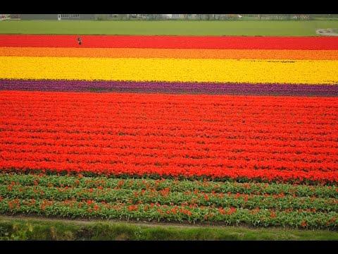 Keukenhof Garden in Netherlands | Visit Keukenhof Garden Tour | Keukenhof Garden Travel Videos Guide
