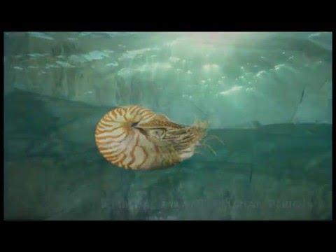 The Niagara Escarpment: The Giant's Rib