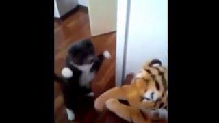 Ненависть Кота к Тигру!! Cat vs. Tiger!