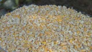 Perky-pet® Seed Options Birds And Bird Feeders Instructional Video | Seed Feeders