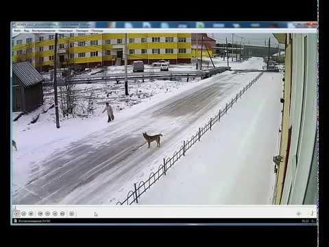 Собаки напали на женщину и поставили ее... Инцест, прикол,порно, малолетка,скайп,приколы