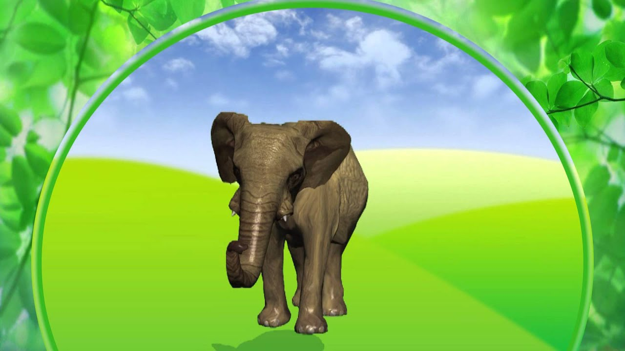 Cтихи о животных для малышей. Лошадь, слон, медведь, тигр. Наше всё!