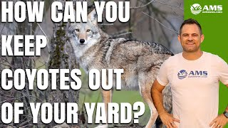 How to Keep Phoenix Coyotes Out of Your Yard