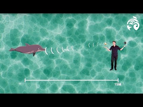 What is Echolocation? | Brain Waves Episode 5